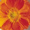 鲜花装饰0025,鲜花装饰,鲜花,花蕊 花香 花朵