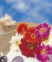 鲜花装饰0026,鲜花装饰,鲜花,花朵 太阳花 小白花