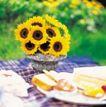 鲜花装饰0033,鲜花装饰,鲜花,太阳花 食物 桌面