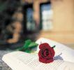 鲜花装饰0034,鲜花装饰,鲜花,玫瑰 书籍 装饰