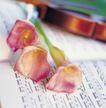 鲜花装饰0038,鲜花装饰,鲜花,鲜花 乐谱 乐器