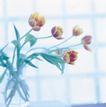 鲜花装饰0047,鲜花装饰,鲜花,