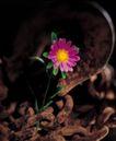 鲜花装饰0049,鲜花装饰,鲜花,