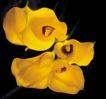 鲜花装饰0051,鲜花装饰,鲜花,