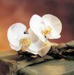 鲜花装饰0058,鲜花装饰,鲜花,