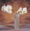 鲜花装饰0061,鲜花装饰,鲜花,白花 花瓣 花瓶