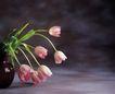 鲜花装饰0064,鲜花装饰,鲜花,鲜花 花式 绿叶