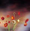 鲜花装饰0066,鲜花装饰,鲜花,野花 红色 花香