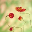 鲜花装饰0067,鲜花装饰,鲜花,花蕊 米黄 颜色