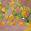 鲜花装饰0071,鲜花装饰,鲜花,橘黄 郁金香 满枝
