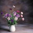 鲜花装饰0073,鲜花装饰,鲜花,静态 写真 花枝
