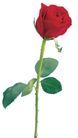 玫瑰花瓣0034,玫瑰花瓣,鲜花,大红色 娇艳 花瓣