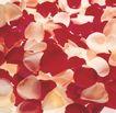 玫瑰花瓣0055,玫瑰花瓣,鲜花,