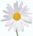 迷人花朵0057,迷人花朵,鲜花,