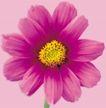 迷人花朵0059,迷人花朵,鲜花,