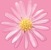 迷人花朵0066,迷人花朵,鲜花,雏菊 花香 袭人