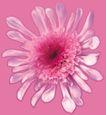 迷人花朵0067,迷人花朵,鲜花,花朵 花萼 绽放