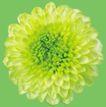 迷人花朵0069,迷人花朵,鲜花,菜花 油菜花 花海