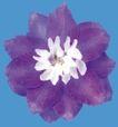 迷人花朵0072,迷人花朵,鲜花,