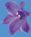 迷人花朵0075,迷人花朵,鲜花,