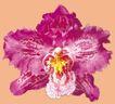 迷人花朵0094,迷人花朵,鲜花,花蕊 金黄 香气