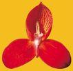迷人花朵0097,迷人花朵,鲜花,鲜花 芬芳 香气