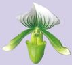 迷人花朵0099,迷人花朵,鲜花,栀子花 花梗 绿色