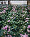 百花齐放0045,百花齐放,鲜花,
