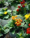 百花齐放0061,百花齐放,鲜花,盆景 绿叶 苗圃
