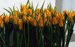 百花齐放0063,百花齐放,鲜花,鲜花 花店 装饰
