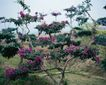百花齐放0068,百花齐放,鲜花,野外 树木 开花