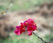 百花齐放0069,百花齐放,鲜花,枝头 小花 户外