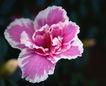 百花齐放0081,百花齐放,鲜花,百花齐放 争先恐后 春天