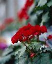 百花齐放0082,百花齐放,鲜花,温暖 鲜花 百花齐放