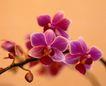 百花齐放0096,百花齐放,鲜花,桃花 花瓣 迷人