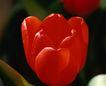 百花齐放0098,百花齐放,鲜花,花朵 红色 艳丽