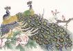 吉祥鸟0032,吉祥鸟,古玩吉祥,孔雀 鸟儿 羽毛