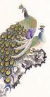 吉祥鸟0058,吉祥鸟,古玩吉祥,美丽鸟类 孔雀 五彩斑斓的羽毛
