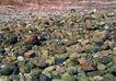 翠石纹0046,翠石纹,纹饰雕塑,