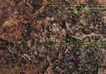 翠石纹0055,翠石纹,纹饰雕塑,
