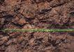 翠石纹0056,翠石纹,纹饰雕塑,