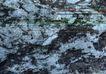 翠石纹0068,翠石纹,纹饰雕塑,灰岩 白云质 杂质