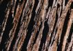 树纹0045, 树纹,纹饰雕塑,