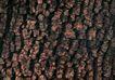 树纹0047, 树纹,纹饰雕塑,