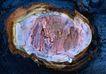 树纹0056, 树纹,纹饰雕塑,