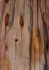 树纹0061, 树纹,纹饰雕塑,大树 树木 苍老