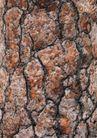 树纹0062, 树纹,纹饰雕塑,槐树 树皮 斑驳