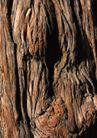 树纹0063, 树纹,纹饰雕塑,树干 疙瘩 粗糙