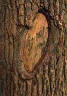 树纹0065, 树纹,纹饰雕塑,树皮 纹饰 树干