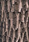 树纹0069, 树纹,纹饰雕塑,槐树 外表 苍老